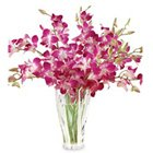 Resplendent fresh humper Orchids in a Vase to Garia