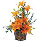 Majestic Exotic Expression Bouquet Of Lilies to Nadia