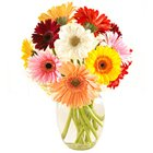 Extravagant Vase of 12 Mixed Gerberas Beauty to Hooghly