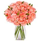 Delicate Vase Decked with 12 Carnations in Pink to Garia