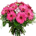Divine Bunch of Pink Gerberas to Howrah