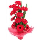 Precious Bouquet of Gerberas in Red Colour to Behala