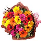 Majestic Gift of Fifteen Multi-hued Gerberas Bunch to Nadia