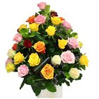 Spectacular Floral Blast Mixed Roses Collection to Garia