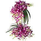 Summer Delight Tall Bouquet of 30 Stems of Orchid to Salt lake