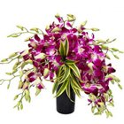 Splendid Days 12 Orchids Arrangement in a Glass Vase to Garia