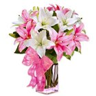 Endearing Collection of Spectacular Lilies to Nadia