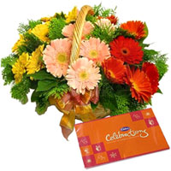 Blissful Cadbury Celebrations Pack with Assorted Gerberas Basket  to Bakura
