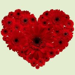 Dazzling 2 Dozen Red Gerberas Arrangement in Heart Shape   to Garia