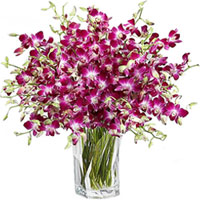 Exotic Orchids Presented in a Glass Vase to Howrah