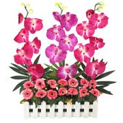Captivating Everlasting Orchids Flowers Garden