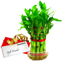 Little Luxury Bamboo Plant and Pantaloons Gift Voucher