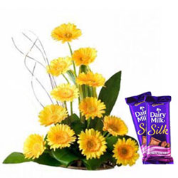 Hand-Arranged Assorted Gerberas Bouquet with Dairy Milk Silk
