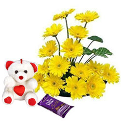 Graceful Yellow Gerberas Arrangement with Teddy N Dairy Milk Silk