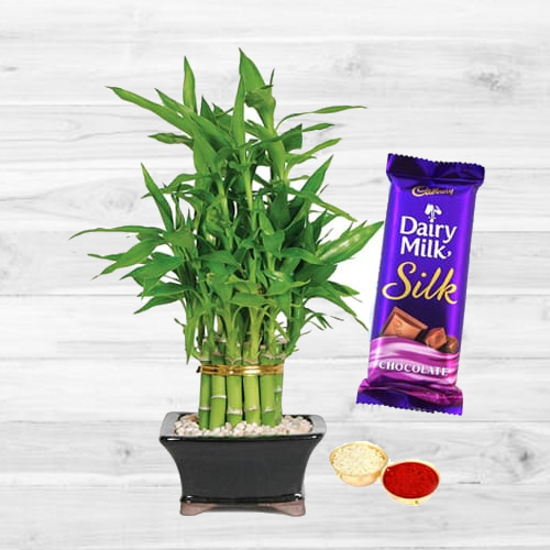 2 Tier Bamboo Plant N Silk Combo
