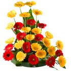 Attention-Getting 30 Mixed Colorful Gerbera Arrangement of Majestic