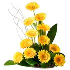 Attention-Getting Bouquet of One Dozen Gerberas in Style