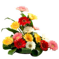 Delightful Bouquet of 15 Mixed Gerberas