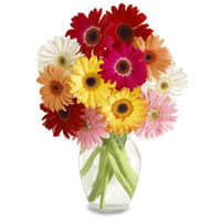 Expressive Love Arrangement of 15 Gerberas in Mixed Colors