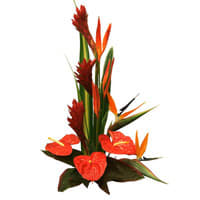 Visually Birds of Paradise and Anthuriums Arrangement for Sweet Surprise