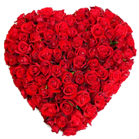 Enchanted Red Colored 150 Dutch Roses Heart Shaped Arrangement