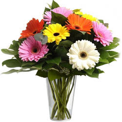 Gorgeous Mixed Gerberas in a Glass Vase