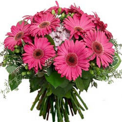 Divine Bunch of Pink Gerberas