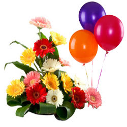 Lovely Mixed Gerberas Bouquet with Balloons