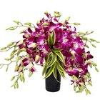 Splendid Days 12 Orchids Arrangement in a Glass Vase