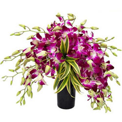 Splendid Days 12 Orchids Arrangement in a Glass Vase