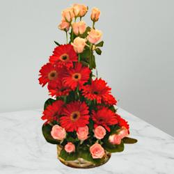 Gripping Vibes Gerberas and Roses Special Arrangement