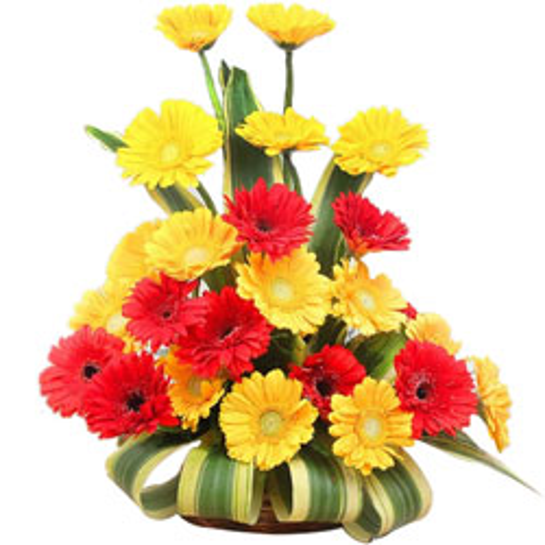 Bright Arrangement of Red & Yellow Color Gerberas
