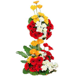 Stunning Long Standing Bouquet of Fifty Mixed Gerberas