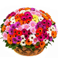 Radiant Mixed Gerberas arranged in a Basket