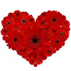 Dazzling 2 Dozen Red Gerberas Arrangement in Heart Shape