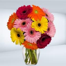 Striking Assorted Gerberas arranged in a Glass Vase