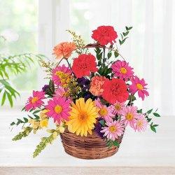 Radiant Carnations and Gerberas display in a Basket