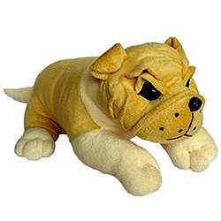 Cute  Small Bull Dog  (12 inches)
