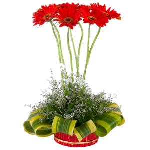 Dazzling Arrangement of Seven Gerberas